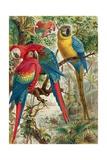"""Macaws  Plate from """"Brehms Tierleben: Allgemeine Kunde Des Tierreichs""""  Vol5  P60  Published by…"""
