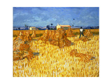Harvest in Provence  June 1888