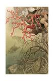 """Red Coral  Plate from """"Brehms Tierleben: Allgemeine Kunde Des Tierreichs""""  Vol10  P608 …"""