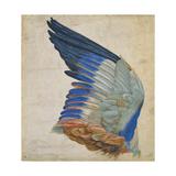 Wing of a Blue Roller  Copy of an Original by Albrecht Durer of 1512