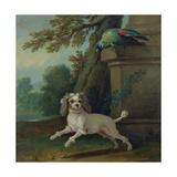 Zaza  the Dog  C1730