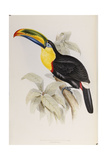 A Monograph of the Ramphastidae  or Family of Toucans  First Edition  Published 1834