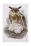 A Great Owl and Chicks  from 'The Birds of Europe'  Published 1832-37