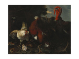 A Hen  Rooster and Turkey in a Farmyard