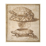 Design for a Lidded Box in the Shape of a Tortoise  Shown Open and Shut