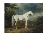 White Horse in a Wooded Landscape  1791