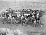 Group of Cowboys and their Horses  Sheridan  Wyoming  C1890