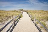 Dunes on Cape Cod National Sea Shore in Cape Cod  Boston  Usa
