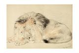 Study of a Lion  1879