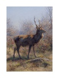 The Stag  1875