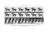 The Canter: One Stride Photographer Synchronously from Two Points of View  1887  Illustration…