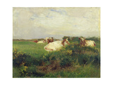Cows in Field  1895