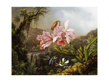 Orchids and Hummingbirds in a Brazilian Jungle  C 1871-72