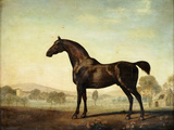 Sweetwilliam'  a Bay Racehorse  in a Paddock  1779