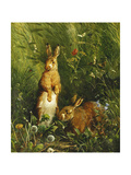 Hares  1878