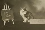 Cat Study Number 6