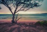 Memory Beach  Kauai