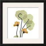 Nasturtium Bouquet