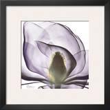 Precious Orchid in Purple Close