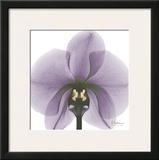Precious Orchid in Purple
