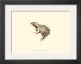 Sepia Frog III