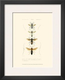 Antique Bees II