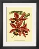 Orchid Splendor II