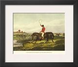 The English Hunt VIII