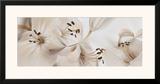 Lilies No 54