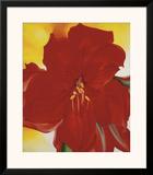 Red Amaryllis  c1937