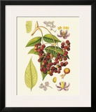 Crimson Berries IV