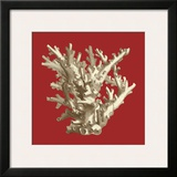 Coral on Red I