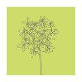 Citron Happy Flower