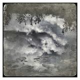 Zen Pond 1