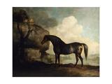 Marske'  a Dark Bay Racehorse  in a Rocky River Landscape