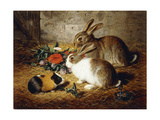 Escaped: Two Rabbits and Guinea Pig Giclée par Alfred R.		 Barber