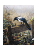 A Magpie Observing Fieldmice