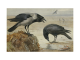 A Hooded Crow and a Carrion Crow Giclée par Archibald		 Thorburn
