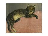 Summer, Cat on a Railing Giclée par Théophile Alexandre Steinlen