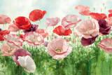 Poppies Pleasure
