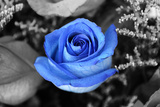 Blue Rose Plastic Sign