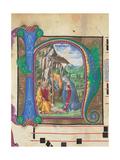 Nativity  Francesco di Giorgio Martini