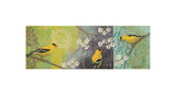 Goldfinches Blooming