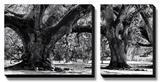 Majestic Oaks II Tableau multi toiles par Jeff Maihara