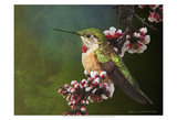 Hummer with Blossoms