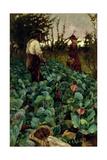 Cabbage Garden  1877