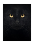 Close-Up Of A Black Cat Looking At The Camera  Isolated On White