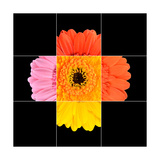 Colorful Gerbera Marigold Flower Mosaic Design