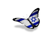 Israeli Flag Butterfly Flying  Isolated On White Background