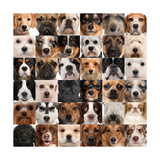 Collage Of 36 Dog Heads Reproduction d'art par Life On White